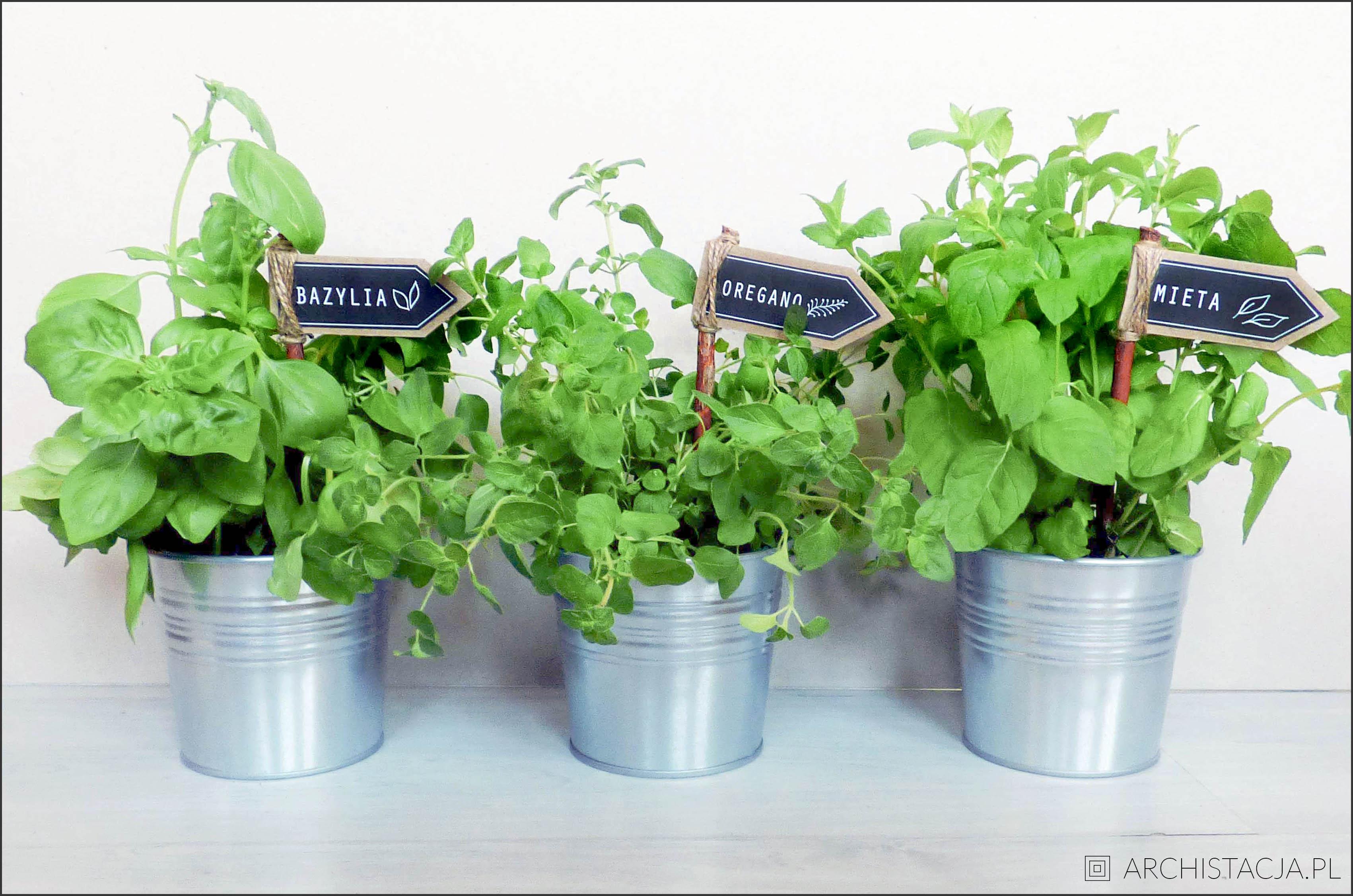 ziołowy ogródek