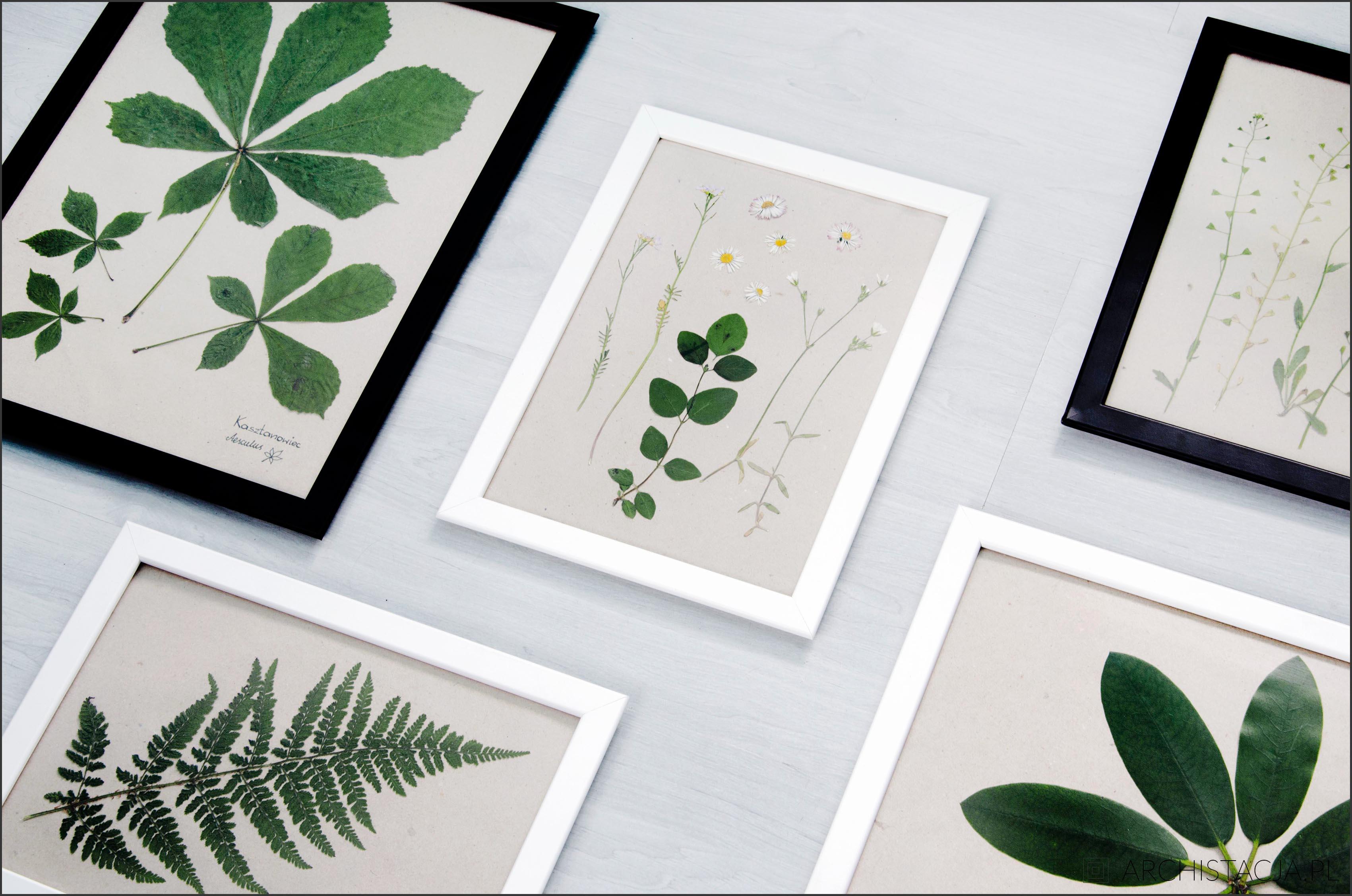 roślinne obrazy